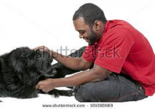 playing while building relationship with your pet