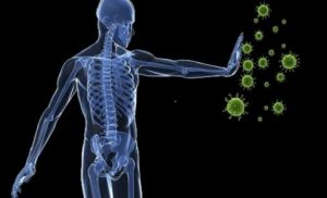 How The Immune System of The Body Works