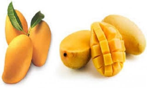 The Health Benefits of Mango Fruit