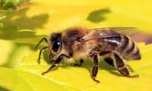 Things You Need To Know About The Honey Bee