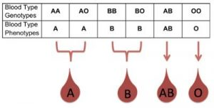 Conversion of blood phenotype to blood phenotype